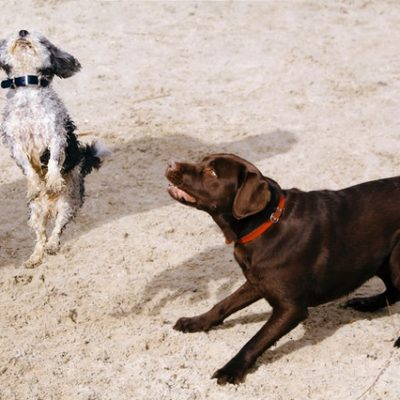 Online-Tarifvergleich Tierhalterhaftpflicht