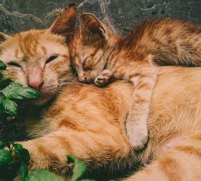 Katzen-Operationskostenversicherung der BarmeniaDirekt