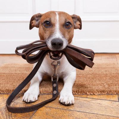 Hundehalterhaftpflicht Versicherung der BarmeniaDirekt